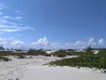 Sand dunes partly covered with green vegetation Royalty Free Stock Photo