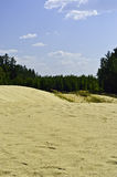Sand-dunes are in a pine-wood. Royalty Free Stock Photos