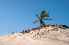 Sand dunes, Pititinga, Natal (Brazil) Royalty Free Stock Photography