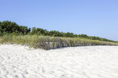Sand dunes at the Polish Baltic coast Royalty Free Stock Photo