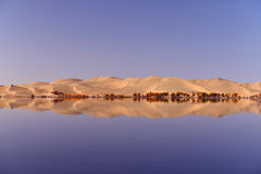 The Sand dunes and populus euphratica in the lake. The Sand dunes and populus euphratica Stock Image