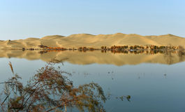 The Sand dunes and populus euphraticainverted image Stock Photo