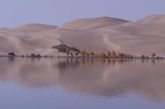 The Sand dunes and populus euphraticainverted image Stock Photography