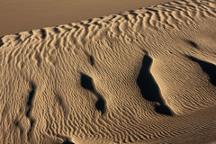 Sand Dunes and Ripples Stock Photography