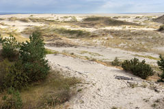 Sand dunes of the russian part Curonian Spit in autumn Stock Photos