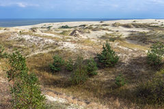 Sand dunes of the russian part Curonian Spit in autumn Royalty Free Stock Images