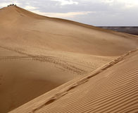 Sand dunes of the Sahara desert Royalty Free Stock Photo