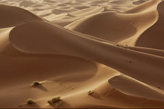 Sand dunes in the Sahara desert. Hight sand dunes in the Sahara desert in evening light Stock Image