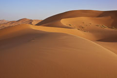 Sand dunes in the Sahara desert Royalty Free Stock Photo