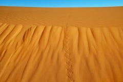 Sand dunes in the Sahara Desert Royalty Free Stock Photography