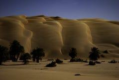 Sand dunes on Sahara desert. In front palm trees. stock image