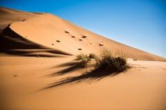 Sand dunes of the Sahara desert Stock Image