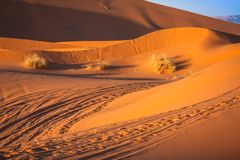 Sand dunes in the Sahara Desert, Merzouga, Morocco.  Royalty Free Stock Photo