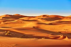 Sand dunes in the Sahara Desert Stock Images