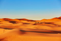 Sand dunes in the Sahara Desert Royalty Free Stock Image
