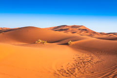 Sand dunes in the Sahara Desert, Merzouga, Morocco Royalty Free Stock Image