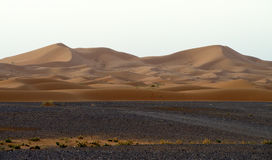 Sand dunes in Sahara Royalty Free Stock Images