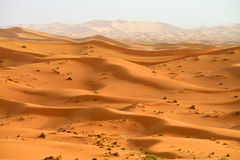 Sand dunes in Sahara Stock Photography