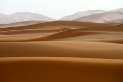 Sand dunes in Sahara Stock Images