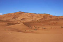 Sand Dunes in the Sahara Royalty Free Stock Images