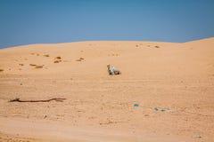 Sand dunes of Sahara desert near Ong Jemel in Tozeur,Tunisia. Royalty Free Stock Image