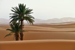 Sand dunes in Sahara Stock Photography