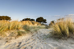 Sand Dunes at Sandbanks Royalty Free Stock Photo
