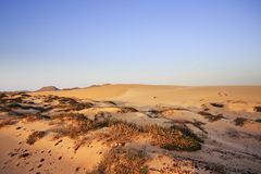 Sand dunes and scrub Stock Images