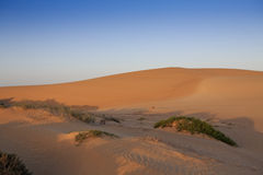 Sand dunes and scrub in the shadows at sunset Royalty Free Stock Photos