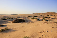Sand dunes and scrub at sunset Stock Photography