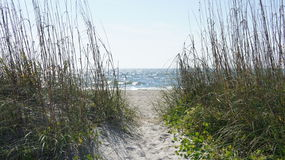 Sand dunes and sea oats Royalty Free Stock Photos