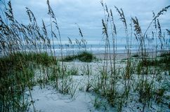 Sand Dunes and Sea Oats on Amelia Island. Early morning on a cloudy morning over sand dunes and sea oats on Amelia Island, Florida stock photos