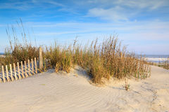 Sand Dunes and Sea Oats Folly Beach South Carolina. Sand dune with sea oats and erosion fencing on Folly Beach near Charleston, South Carolina Stock Images