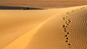 Sand dunes with sillouhette of camel, Erg Chigaga. Sand dunes with a silhouette of camel, Erg Chigaga, Moroccan Sahara Stock Photo