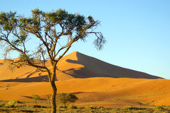 Southern african landscapes. Sand dunes at Soussousvlei, Namibia Royalty Free Stock Images