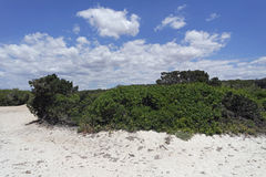Sand dunes in spain. Sand dunes of es trenc on spanish island mallorca Stock Photo