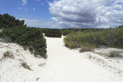 Sand dunes in spain. Sand dunes of es trenc on spanish island mallorca Royalty Free Stock Images