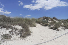 Sand dunes in spain. Sand dunes of es trenc on spanish island mallorca Royalty Free Stock Photos