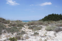 Sand dunes in spain. Sand dunes of es trenc on spanish island mallorca Royalty Free Stock Photo