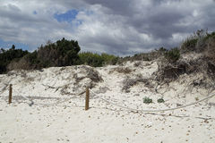 Sand dunes in spain. Sand dunes of es trenc on spanish island mallorca Stock Images