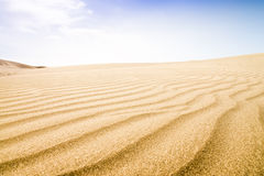 Sand dunes in sunny day. Stock Images