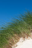 Sand dunes with tall grass and blue sky, Luskentyre beach, Isle of Harris, Scotland. Royalty Free Stock Photos