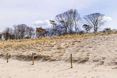 Sand, dunes and trees Stock Photos