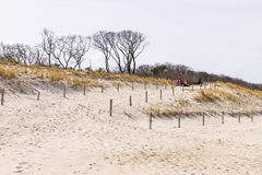 Sand, dunes and trees Stock Images