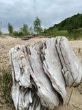 Driftwood Dunes sand beach trees bushes nature coastal travel relaxation. Sand dunes and trees Stock Photos