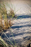 Sand dunes, trees and grass Stock Photos