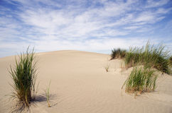 Sand dunes with vegetation Royalty Free Stock Photos