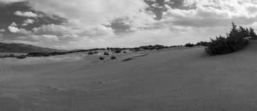 Sand dunes and wild bushes in black and white panorama. Stock Photography