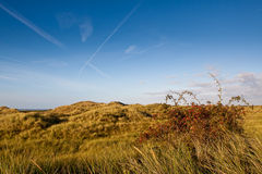 Free Sand Dunes With Beach Grass And Pink Bottle Royalty Free Stock Photos - 11464018