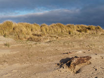 Sand Dunes at Ynyslas Stock Images